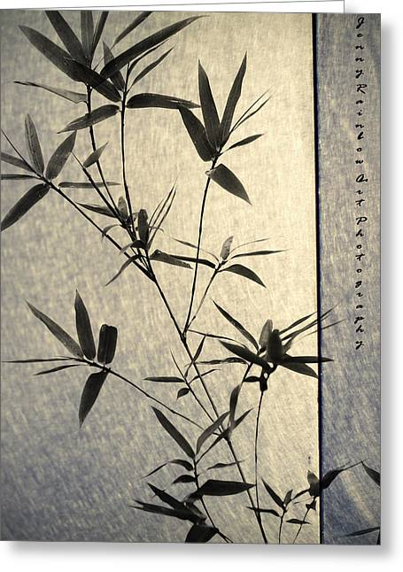 Jenny Rainbow Art Photography Greeting Cards - Bamboo Leaves Greeting Card by Jenny Rainbow