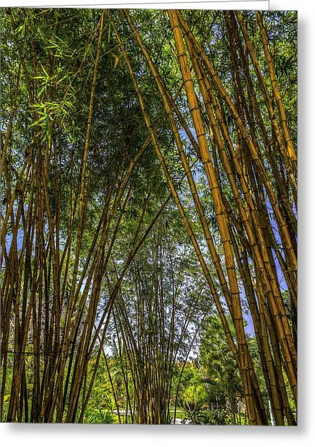 Redang Greeting Cards - Bamboo Greeting Card by Mario Legaspi