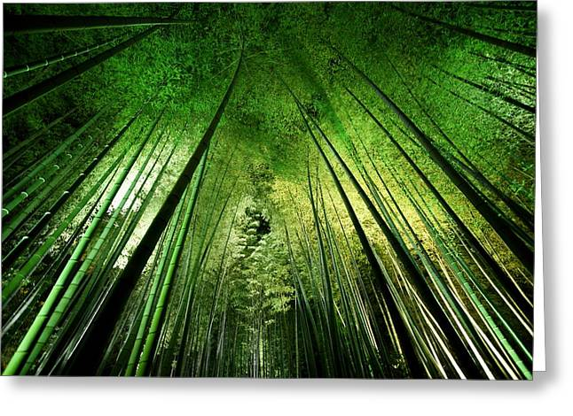 Bamboo Night Greeting Card by Takeshi Marumoto