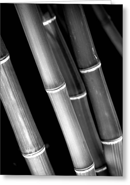 Bamboo Wall Greeting Cards - Bamboo No.3 Greeting Card by Bonnie Bruno