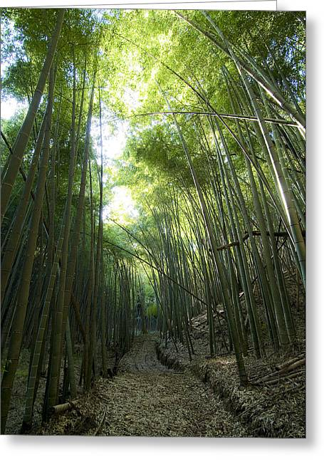 Chinese Landscape Greeting Cards - Bamboo Road Greeting Card by Aaron S Bedell
