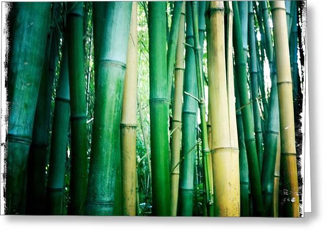 Bamboo Greeting Card by Sarah Coppola