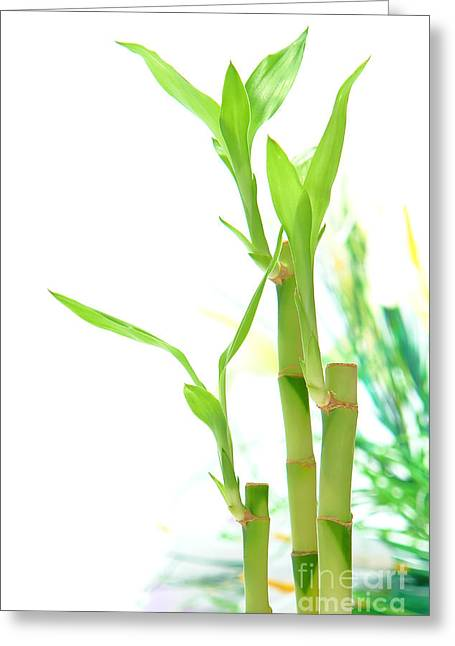 Green Bamboo Greeting Cards - Bamboo Stems and Leaves Greeting Card by Olivier Le Queinec