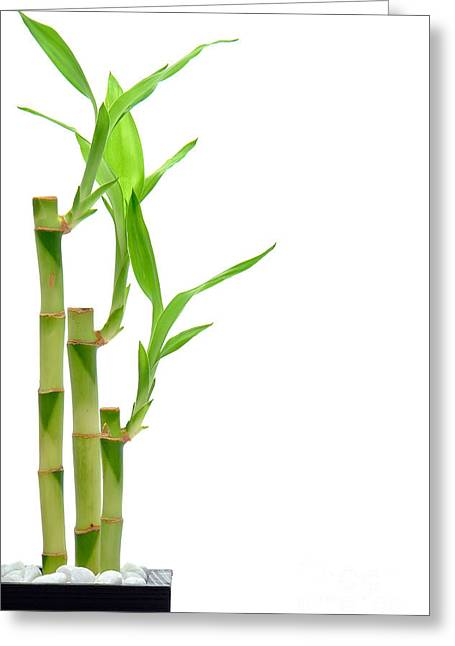 Green Bamboo Greeting Cards - Bamboo Stems in Black Vase Greeting Card by Olivier Le Queinec