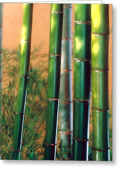 Green Bamboo Greeting Cards - Bamboo Sticks Greeting Card by Panoramic Images