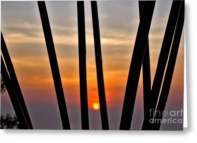 Sunset Abstract Greeting Cards - Bamboo Sunset Greeting Card by Kaye Menner
