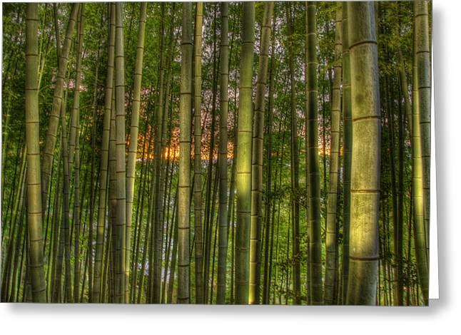 Osaka-kobe-kyoto Greeting Cards - Bamboo Sunset Greeting Card by Thad Roan
