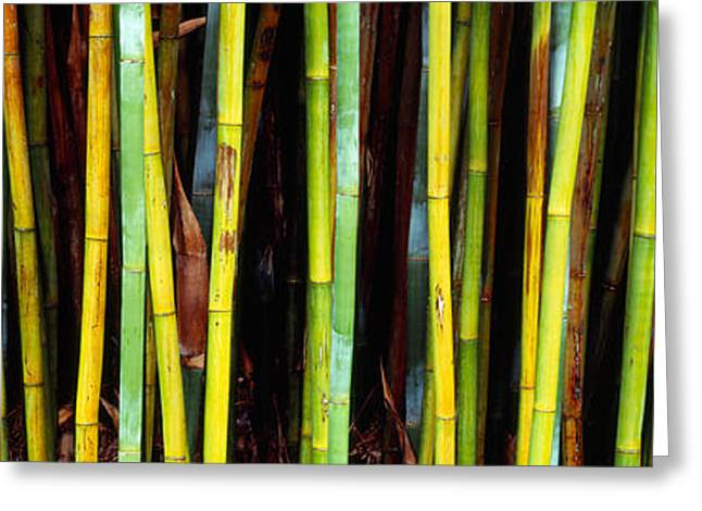 Tropical Plants Greeting Cards - Bamboo Trees In A Botanical Garden Greeting Card by Panoramic Images