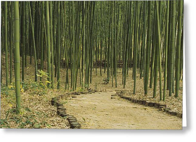 Repetition Greeting Cards - Bamboo Trees On Both Sides Of A Path Greeting Card by Panoramic Images