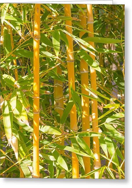 Bamboo Fence Greeting Cards - Bamboo vertical Greeting Card by Christina Rahm