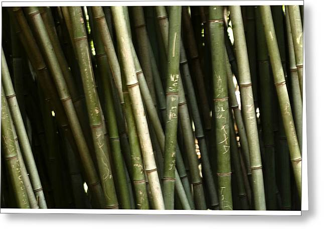 Bamboo Wall Greeting Card by Davina Washington