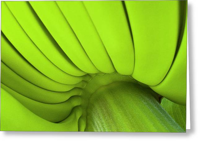 Culinary Greeting Cards - Banana Bunch Greeting Card by Heiko Koehrer-Wagner