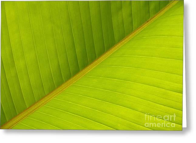 Banana Plants Greeting Cards - Banana Leaf Diagonal Pattern Close-up Greeting Card by Anna Lisa Yoder