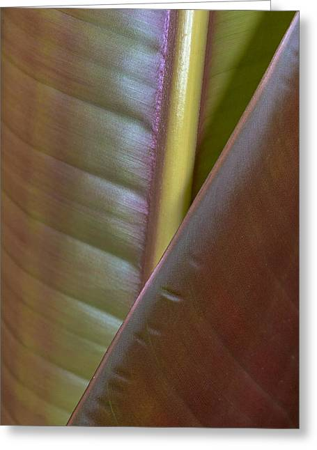 Banana Leaf, Sarapiqui, Costa Rica Greeting Card by Panoramic Images