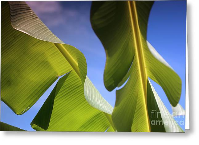 Fruit Tree Art Greeting Cards - Banana Leaves Greeting Card by Cheryl Young