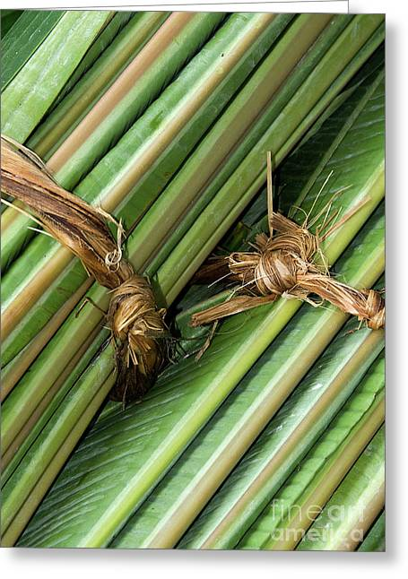 Banana Leaves Greeting Card by Rick Piper Photography