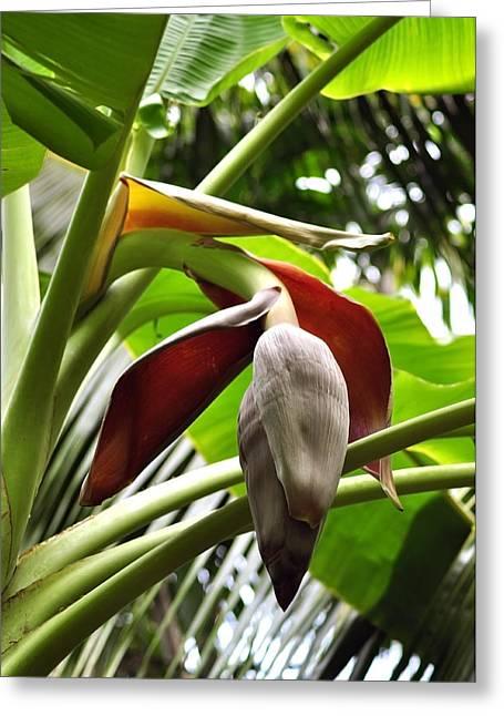 Macro Photography Pyrography Greeting Cards - Banana Greeting Card by Naushad  Waheed