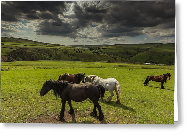 Pasture Scenes Greeting Cards - Band Of Horses Greeting Card by Chris Fletcher