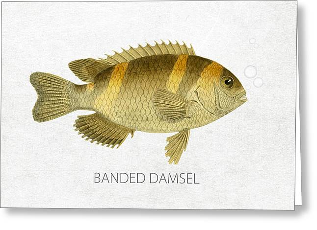 Aquarium Fish Digital Greeting Cards - Banded damsel Greeting Card by Aged Pixel