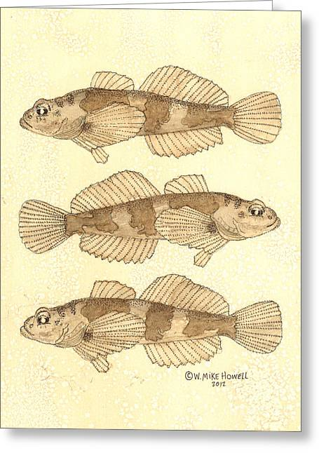Aquatic Greeting Cards - Banded Sculpin Greeting Card by Mike Howell