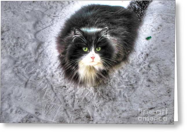 Prairies Pyrography Greeting Cards - BANDITO cat Greeting Card by Yury Bashkin