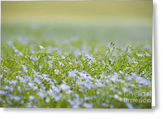 Selective Soft Focus Greeting Cards - Bands of Blue Greeting Card by Anne Gilbert