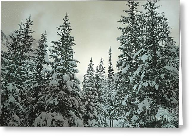 Snowy Night Greeting Cards - Banff Enchanted Woods Greeting Card by Andrea Hazel Ihlefeld