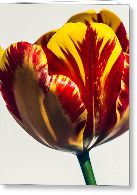 Wholesale Flowers Online Greeting Cards - Banja Luka A Greeting Card by Courtney Trusty