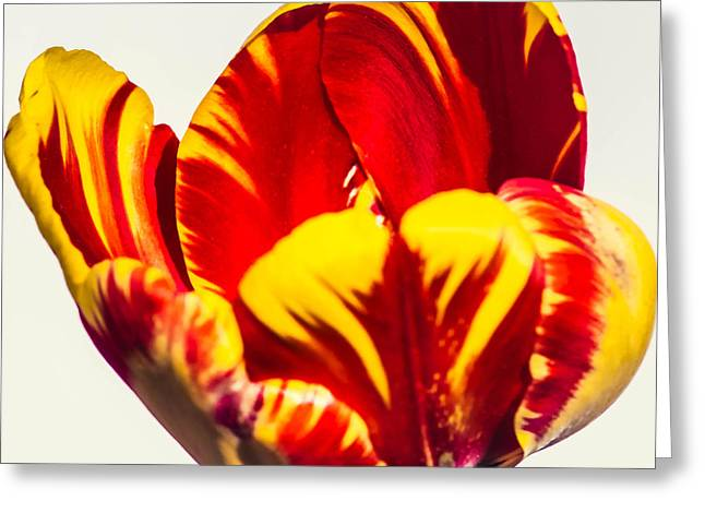 Wholesale Flowers Online Greeting Cards - Banja Luka B Greeting Card by Courtney Trusty