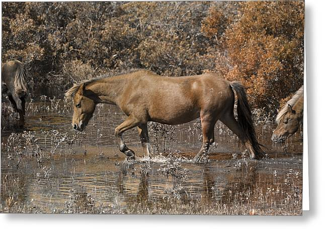 Feral Greeting Cards - Banker Ponies Greeting Card by Betsy C  Knapp