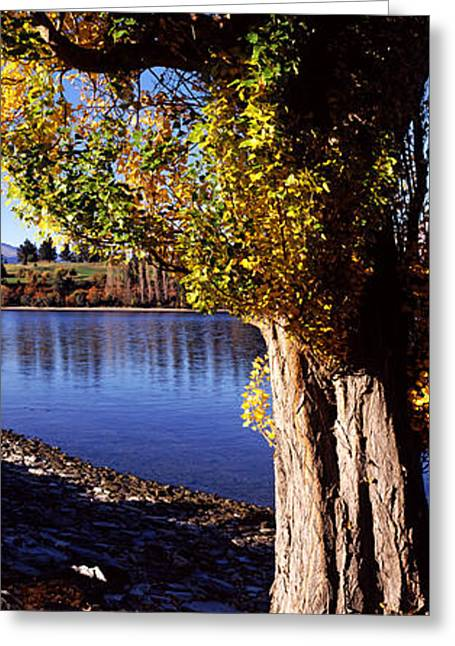 Autumn Colors Greeting Cards - Banks Of Lake Wakatipu, Queenstown Greeting Card by Panoramic Images