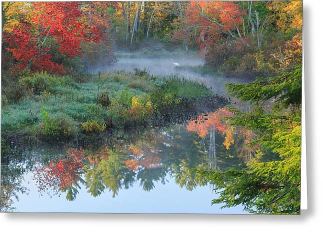 Reflection In Water Greeting Cards - Bantam River Autumn Square Greeting Card by Bill  Wakeley