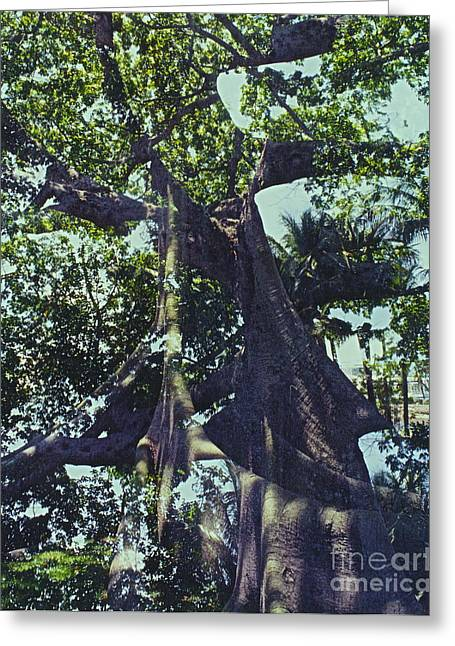 Thick Roots Greeting Cards - Banyan 3 Greeting Card by Kasha Baxter