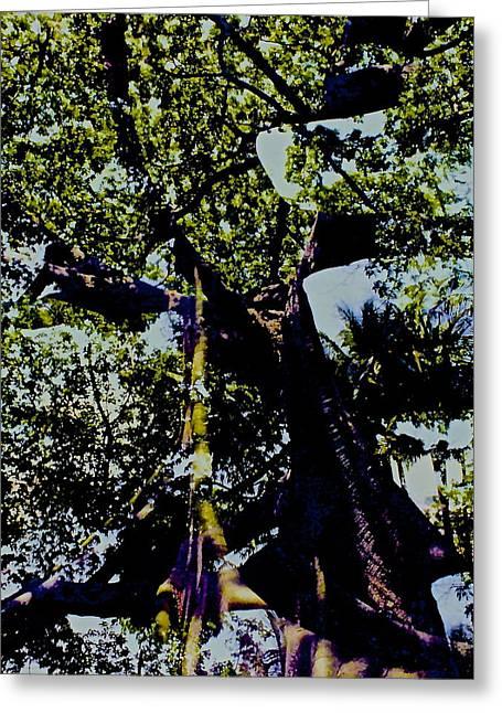 Thick Roots Greeting Cards - BANYAN  More  TREE Greeting Card by Kasha Baxter