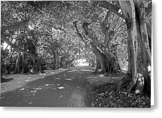 Charlotte Greeting Cards - Banyan Street 2 Greeting Card by HH Photography