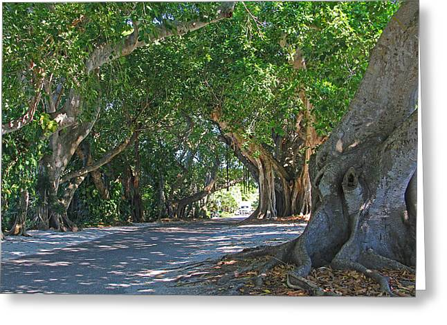 Charlotte Greeting Cards - Banyan Street Greeting Card by HH Photography