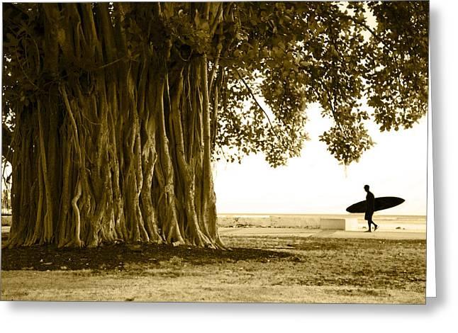 Banyan Surfer Greeting Card by Sean Davey