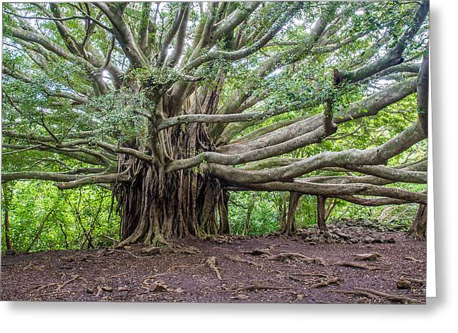 """banyan Tree"" Greeting Cards - Banyan tree of life Greeting Card by Pierre Leclerc Photography"