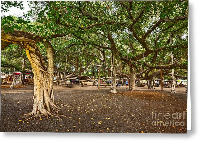 """banyan Tree"" Greeting Cards - Banyan Tree Park in Maui. Greeting Card by Jamie Pham"
