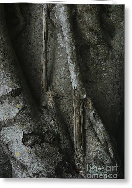 Tree Roots Photographs Greeting Cards - Banyan Tree Roots Greeting Card by Cindi Ressler
