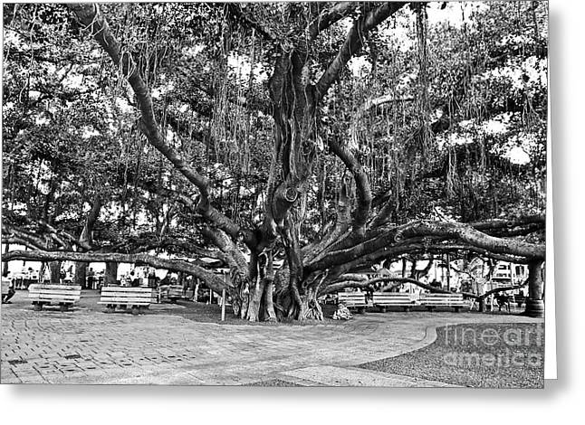 Town Square Greeting Cards - Banyan Tree Greeting Card by Scott Pellegrin