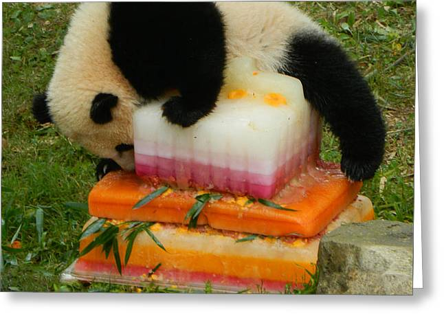 Wildlife Celebration Greeting Cards - Bao Bao Climbing Mt. Saint Birthday Cake Greeting Card by Emmy Marie Vickers