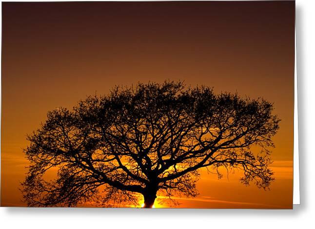 Davorin Mance Greeting Cards - Baobab Greeting Card by Davorin Mance