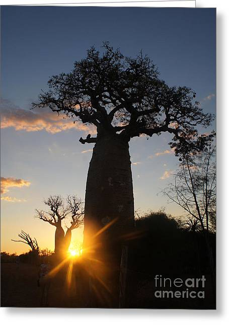 Rudi Prott Greeting Cards - baobab from Madagascar 6 Greeting Card by Rudi Prott