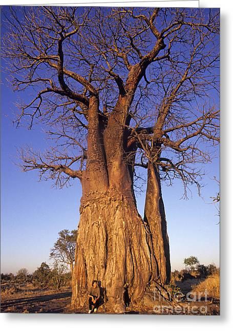 """strange Trees"" Greeting Cards - Baobab tree Botswana Greeting Card by Ros Drinkwater"