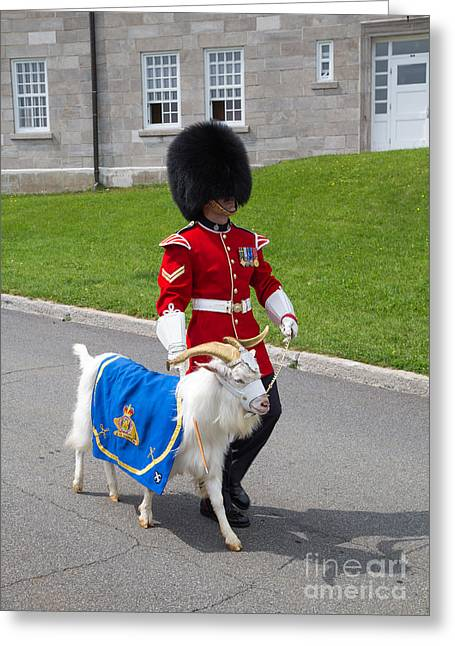 Historic Sites Greeting Cards - Baptiste the Goat Greeting Card by Edward Fielding
