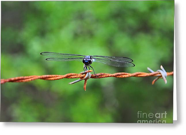 Dragon Fly Photo Greeting Cards - Bar Winged on Barbed Wire Greeting Card by Al Powell Photography USA