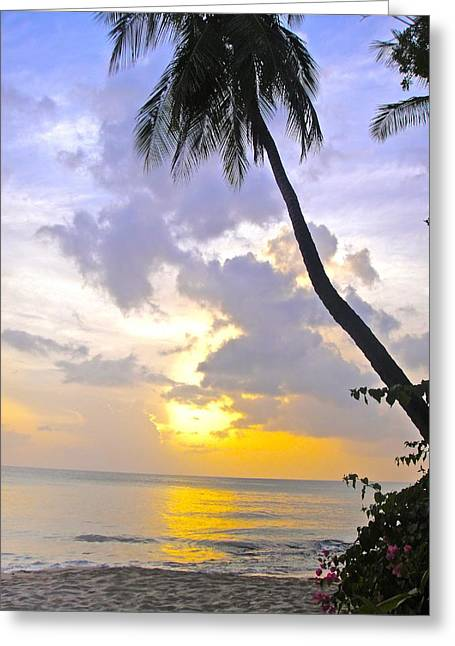 Vaction Greeting Cards - Barbados Sunset under the palm tree Greeting Card by Jennifer Lamanca Kaufman