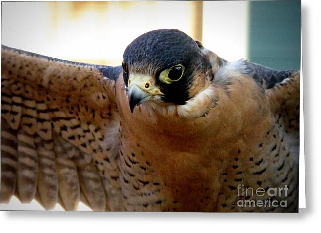 Barbary Falcon Wings Stretched Greeting Card by Lainie Wrightson