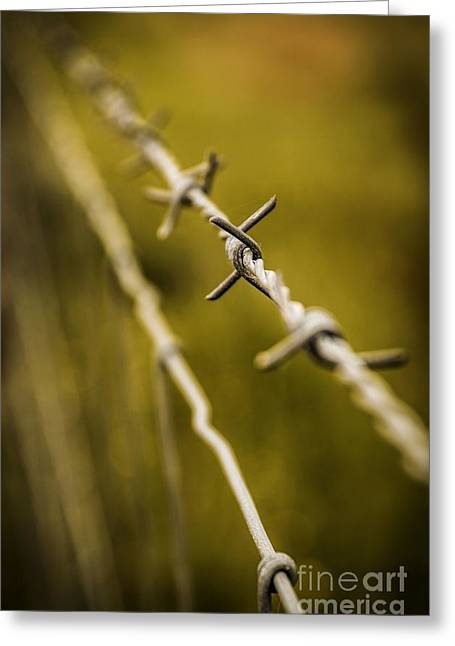 Mesh Greeting Cards - Barbed Wire Greeting Card by Carlos Caetano